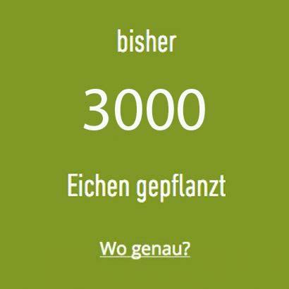 bisher 1330 Eichen im Spessart gepflanzt